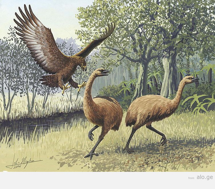 749px-Giant_Haasts_eagle_attacking_New_Zealand_moa