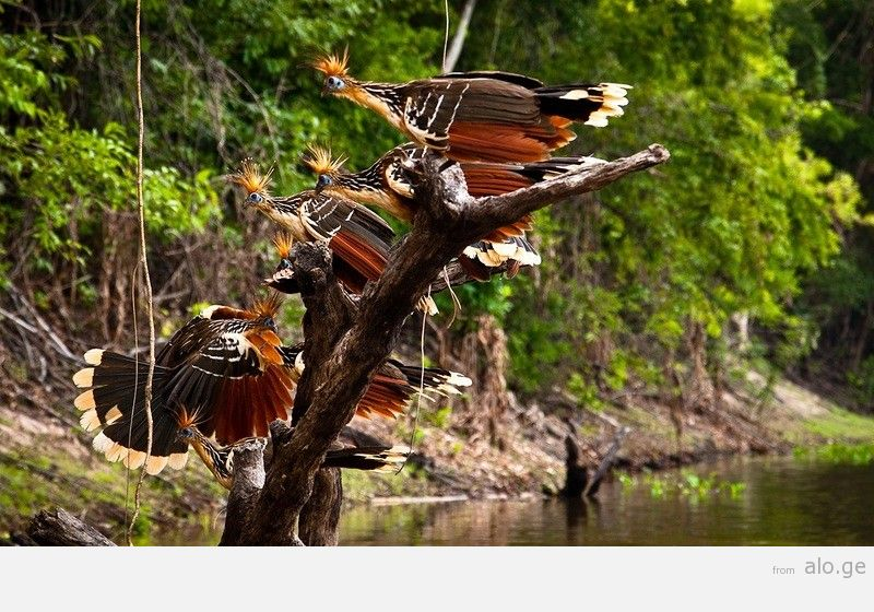 Amazonas06