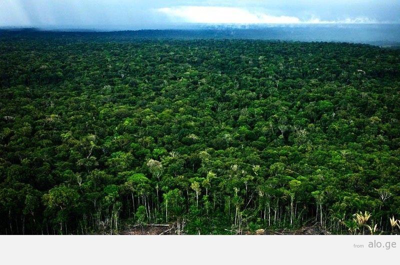 Amazonas08