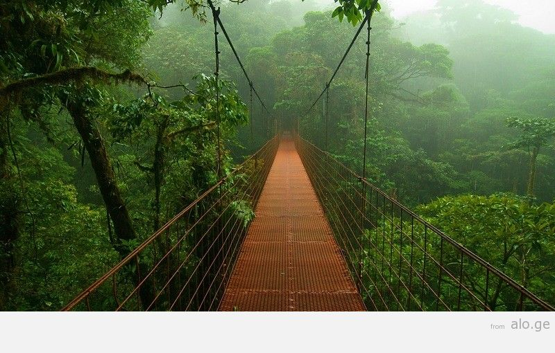 Amazonas14