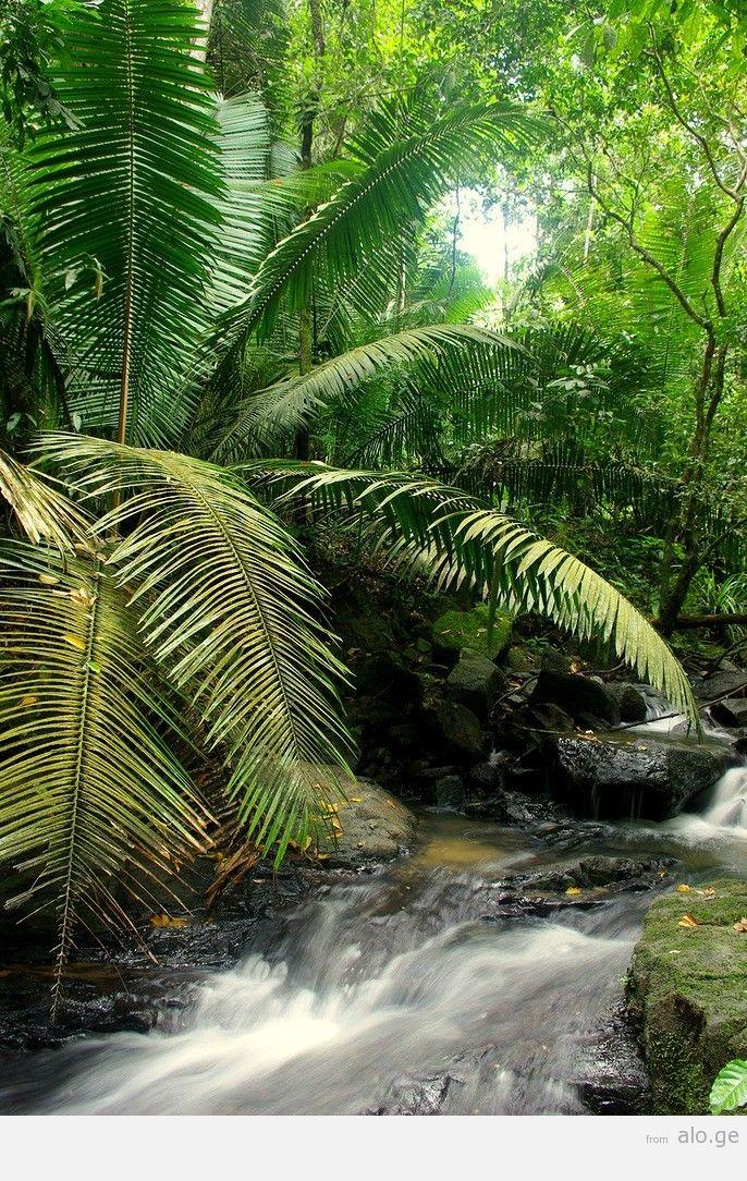 Amazonas35