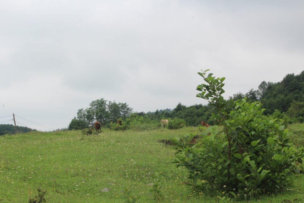 IMG 2129 — Chkhorotsku,Ge